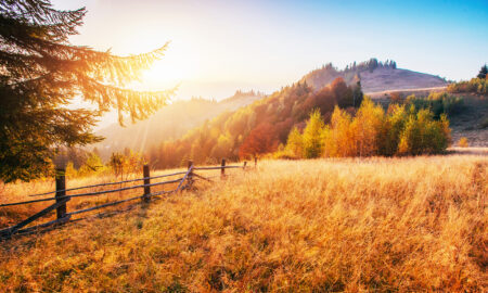 beautiful-mountainside-with-golden-grass-during-beautiful-sunset