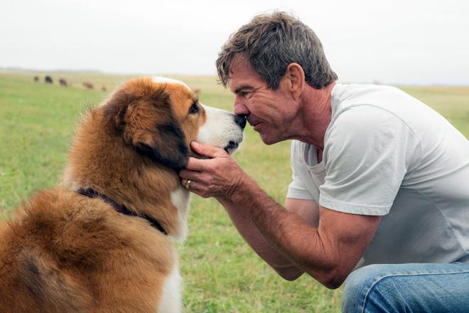 A Dog's Purpose Dennis Quaid Credit Joe Lederer Universal Pictures via Associated Press