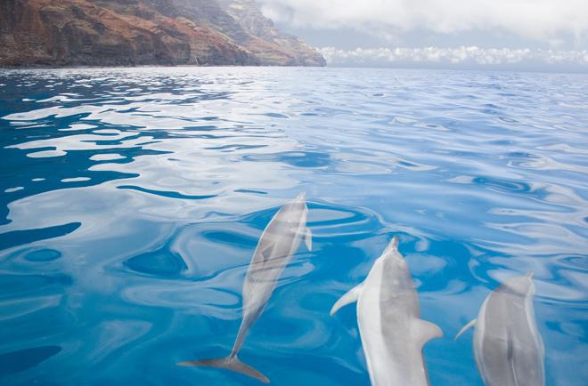 romantic getaway Kuaui, Hawaii dolphins in the ocean