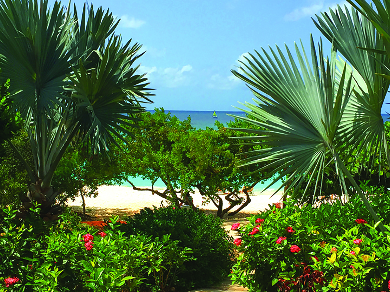 Zemi-Beach-House-Anguilla-BTS-greenery-palm-trees-flowers