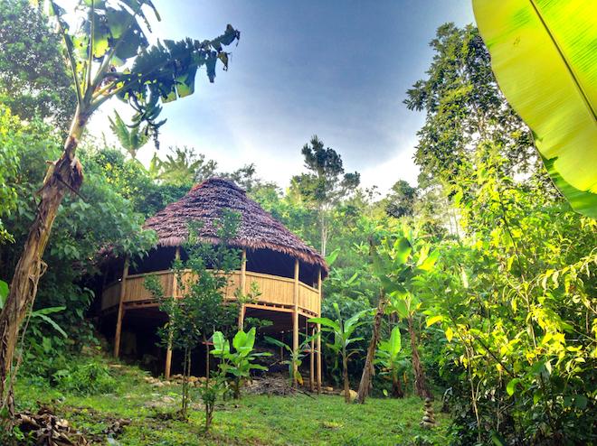 ayahuasca_1