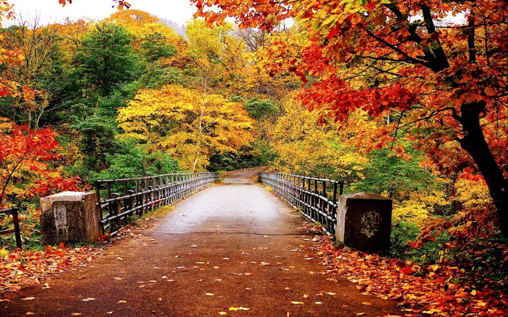 fall colors Most Affordable Cities for Last-MinuteFall Travel main image