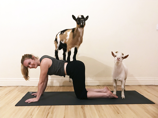Malorie-Mackey-Laughing-Frog-Yoga-Goat-Yoga-Hello-Critter-Care