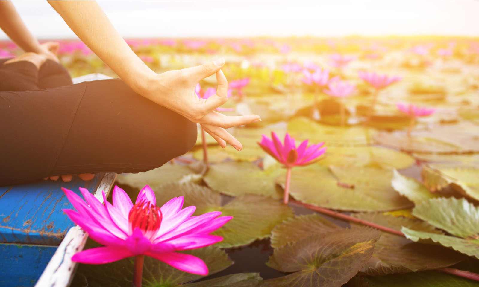lily pads, meditation, wellness, silence, nature
