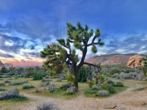 desert_travel_escape_to_the_heat_main_image