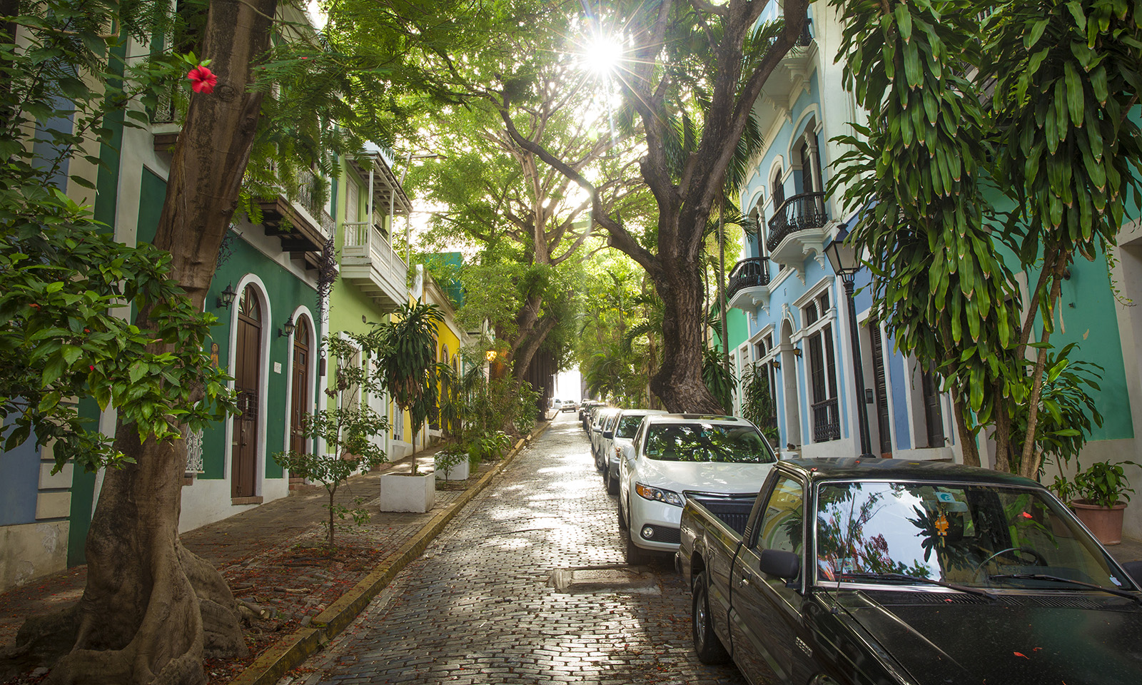 should-your-house-have-air-purifying-plants-beautiful-view-of-street-and-houses