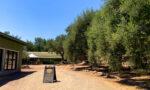 viva-glam-team-malorie-mackey-katarina-van-derham-ojai-olive-oil-company-grounds-olive-trees-main-image