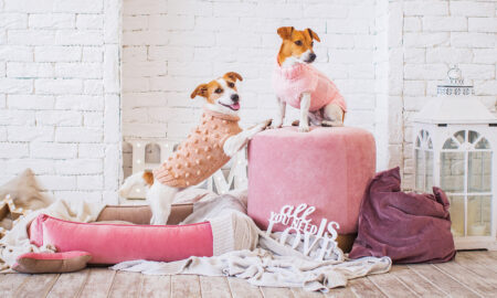 dog-breeds-dont-matter-how-to-take-care-of-dogs