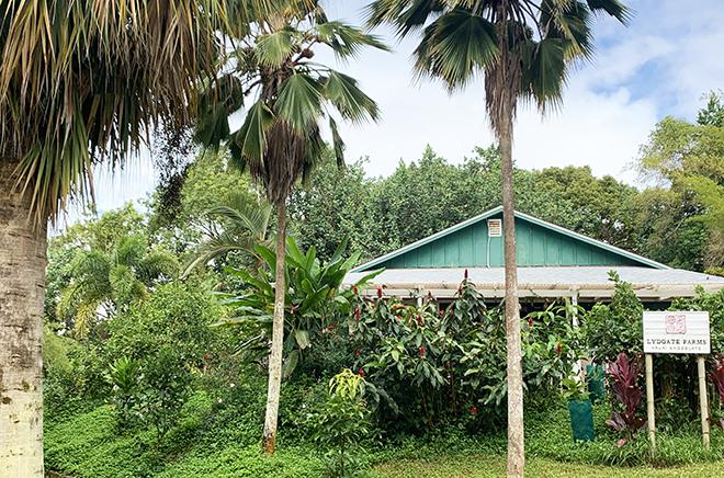 kauai-adventure-destination-beautiful-jungle-nature-travel-traveling-lydgate-farms (2)