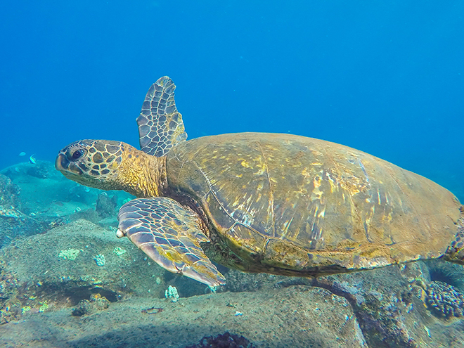kauai-adventure-destination-beautiful-jungle-nature-travel-traveling-seasport-divers