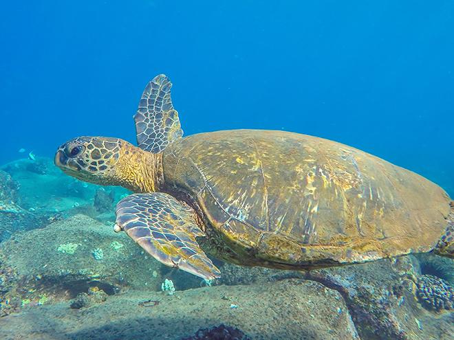 seasport-divers-viva-glam-magazine-best-scuba-diving-kauai