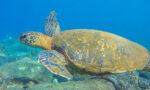 seasport-divers-viva-glam-magazine-best-scuba-diving-kauai-main-imge