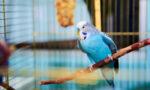 beautiful-blue-parot