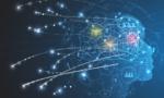 brain-visualize